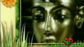 Aloe vera   Miracolo della Natura