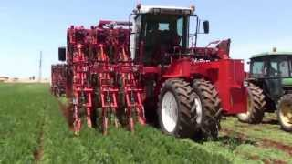 getlinkyoutube.com-Dewulf ZKIIISE - 3-row self-propelled carrot harvester