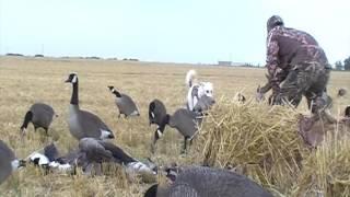 getlinkyoutube.com-2016 Sask Waterfowl Hunting