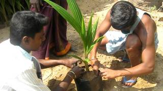 getlinkyoutube.com-Coconut nursery operation in Thanjavur