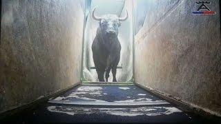 getlinkyoutube.com-Embarque de los toros para  Istres visto con los ojos de Victorino Martín.