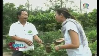 getlinkyoutube.com-ปลูกมะนาวใน  กระถางทำเงิน