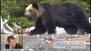 getlinkyoutube.com-【MIKIOジャーナル】誰がクマを殺したか?
