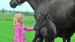 getlinkyoutube.com-Very Cute Baby Horses with their Mother
