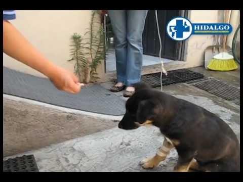 Cachorro Curado de Parvovirus Resumen