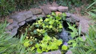 getlinkyoutube.com-5 ponds at Rustys aquatic playground on BZTV
