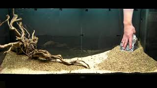 getlinkyoutube.com-Aquarium Setup - Aquascape - Step by Step and Final Product - Live Planted Fish Tank