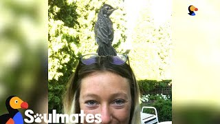 Woman Rescues A Baby Robin And Becomes His Best Friend | The Dodo Soulmates width=