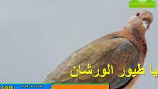 getlinkyoutube.com-يا طيور الورشان  حاسي بحبح الجلفة