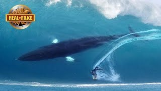 getlinkyoutube.com-HUGE WHALE JOINS SURFER ON BIG WAVE - real or fake?