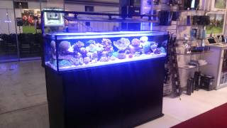 getlinkyoutube.com-New inivatative marine Shallow reef tank