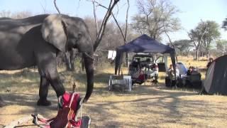 getlinkyoutube.com-Elephant through our Campsite - Khwai River, Botswana 2012