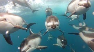 getlinkyoutube.com-GoPro: Swimming with Dolphins - Santa Cruz, CA