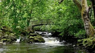 getlinkyoutube.com-3D LANDSCAPE-Relaxation Meditation-Nature Sounds-Flowing Water-Bird Song-Wood Sounds-3D River