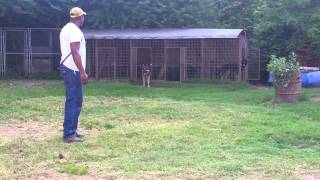 Back yard breeder  kennel dogs