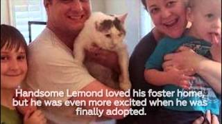 Lemond's Journey to Adoption