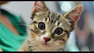 اذكى 10 حيوانات علي كوكب الارض | Facts