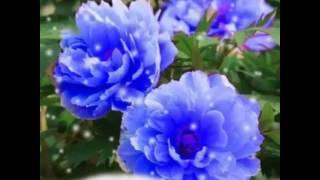 getlinkyoutube.com-ดอกไม้วันศุกร์?