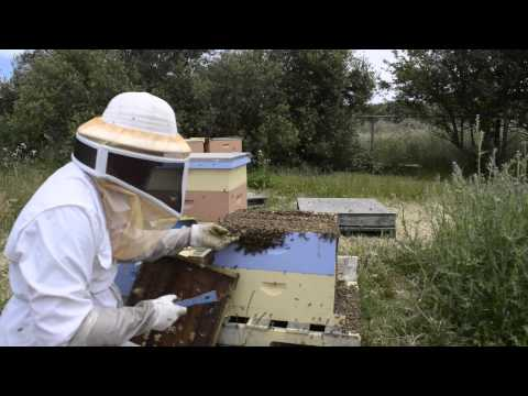 Queen Rearing - How To Make A Queen Cell Builder - Part I