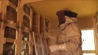 getlinkyoutube.com-Отбор меда в кассетных  павильонах Берендей .  2016г
