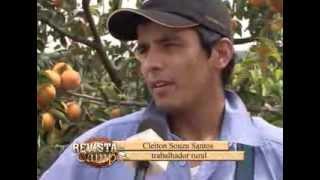 getlinkyoutube.com-Colheita caqui em Itatiba S.P - 08/04/2013 - Revista do Campo