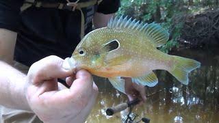 getlinkyoutube.com-Bank Fishing Small Creeks, Lessons Learned.