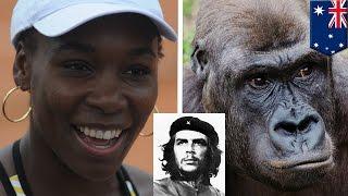 getlinkyoutube.com-Venus Williams gorilla row: ESPN's Doug Adler says he said 'guerrilla,' not a racist - TomoNews