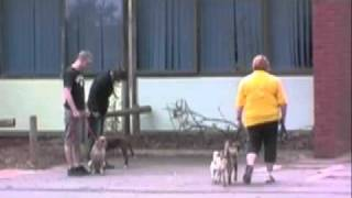 getlinkyoutube.com-The Alpha Canine Group presents Rehabilitating Canine Aggression