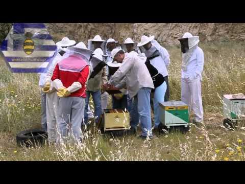 Πρακτικό σεμινάριο για αρχάριους μελισσοκόμους