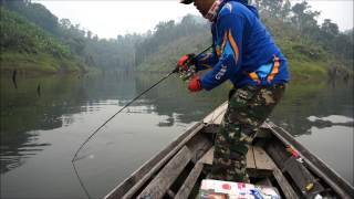 getlinkyoutube.com-giant snakehead fishing in Indonesia