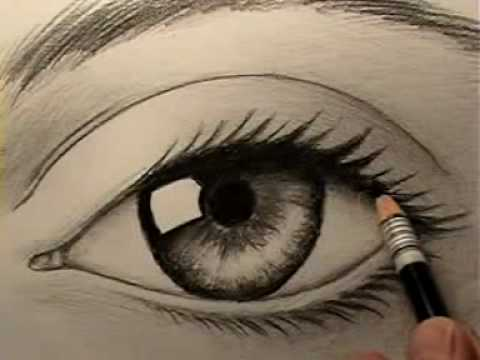 how to draw animals realistic. How to Draw a Realistic Eye