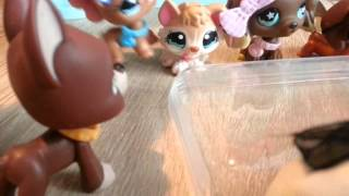 "getlinkyoutube.com-LPS : ""Zakręceni"" #14 Littlest Pet Shop !"