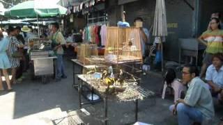 ฟิลิปลิซ่า ฟิลิปพาดูนกสวนจตุจักร