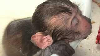 getlinkyoutube.com-怪我した野生の子ザルを保護(宮崎県日南市)