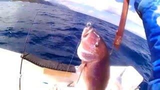ψαρεμα! engetsu,και νεα κολπα με απιστευτα αποτελεσματα