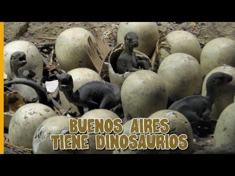 DINOSAURIOS EN ARGENTINA ¿DÓNDE VERLOS? - WHERE TO SEE DINOSAURS IN ARGENTINA