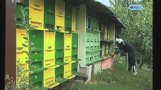 getlinkyoutube.com-Pčele bez zimskih zaliha Darko Milinkovć