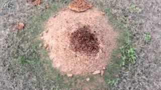 getlinkyoutube.com-무시무시한 개미집