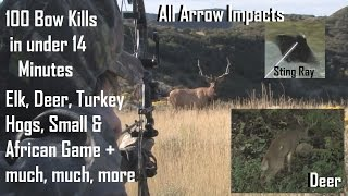 getlinkyoutube.com-100 bow hunts in 14 minutes  BEST ARROW IMPACTS see how we archery hunt big game  PLACEMENT