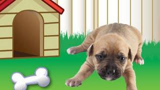 getlinkyoutube.com-Animal Planet Hide & Seek Pets Part 1 - top app videos for kids