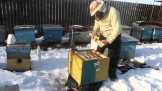 getlinkyoutube.com-Зимовка Украинских маток в нуклеусах на улице