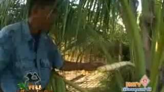 getlinkyoutube.com-เทคนิคการปลูกมะพร้าวน้ำหอม.flv