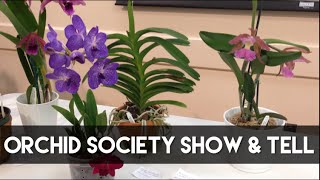 getlinkyoutube.com-Orchid Society Show and Tell