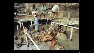 getlinkyoutube.com-Unglaublich grösste menschliche Skelette der Welt