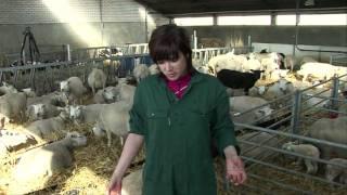 getlinkyoutube.com-Hoe haal je een lam uit een schaap   Patatje Wetenschap 5