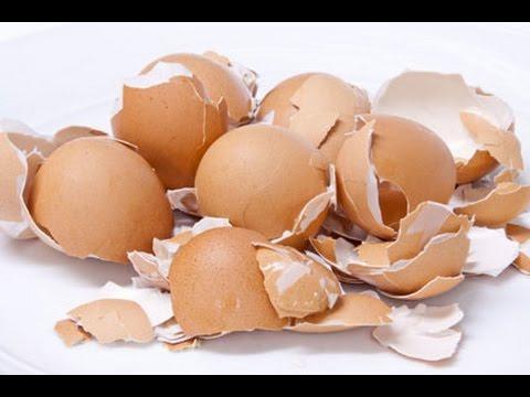 Como utilizar casca de ovo como adubo