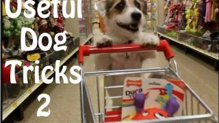 getlinkyoutube.com-Useful Dog Tricks 2 performed by Jesse the Jack Russell Terrier