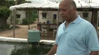 getlinkyoutube.com-Sisteminha Embrapa: produção sustentável e integrada de alimentos - Dia de Campo na TV