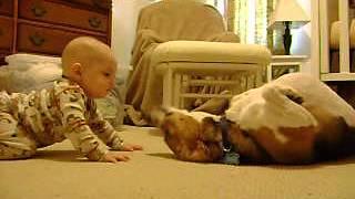 getlinkyoutube.com-Beagle Meets the Baby