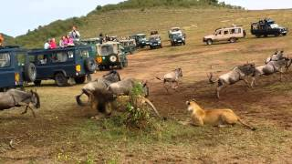 getlinkyoutube.com-Lion ambush at wildebeest crossing